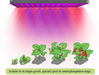 best indoor grow lights