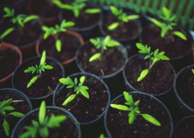 How to Minimize Risk Associated with Hydroponic Cannabis Growing