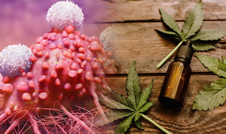 Treating Cancer THC Oil or CBD Oil