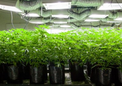 Reasons Why Your Grow Room Should Start Using Solar Panels