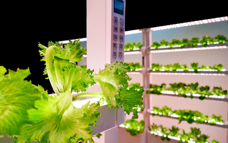 Led Lights for indoor growing
