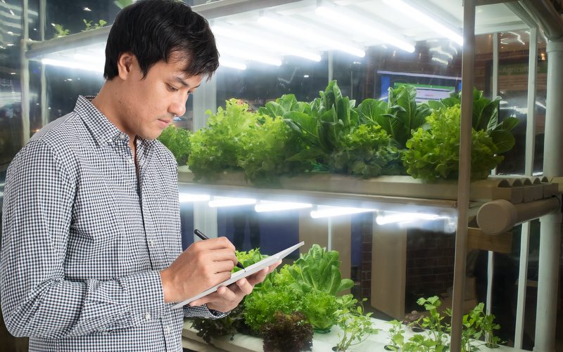 grow faster with led grow lights