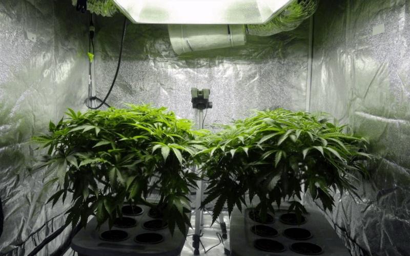 weed growing kit