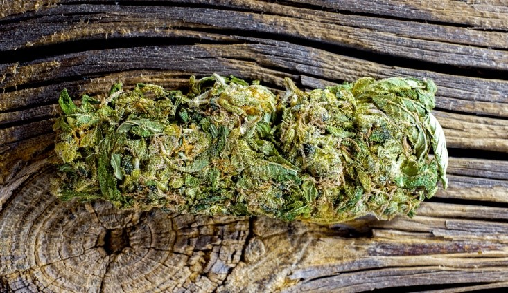 New Weed Strains to Try in 2020