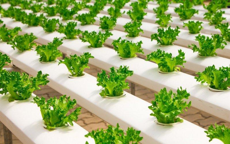 hydroponic farm startup