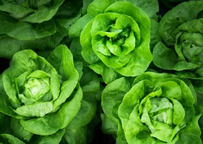 Hydroponic vs Aquaponic Grown Vegetables: Biggest Differences