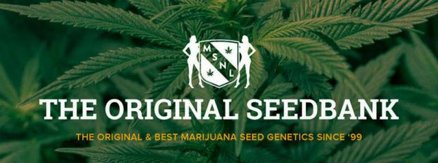 msnl best cannabis seeds