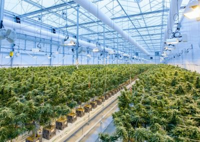 10 Best Hydroponic Systems for Weed   Reviews and Buyer's Guide