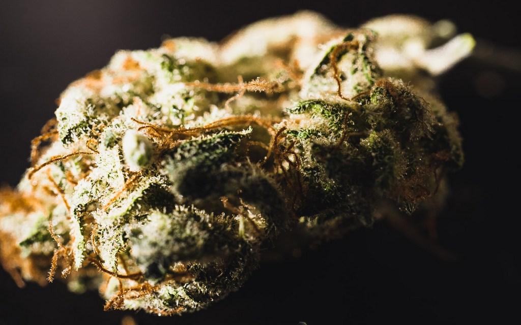top CBD strains