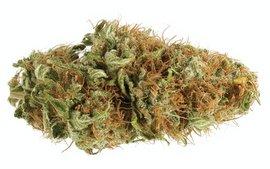 White Widow hybrid strain
