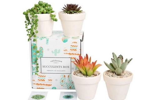 Succulents Box Monthly Subscription Box