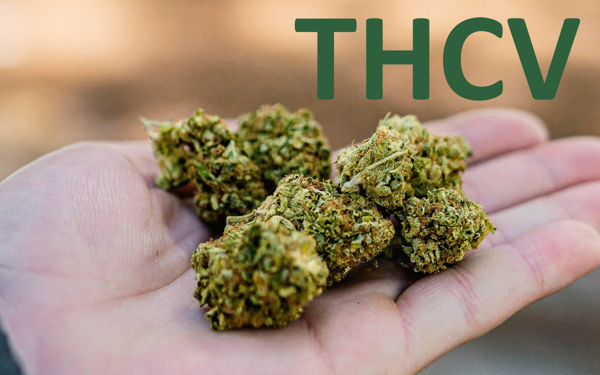 What is THCV? All you Need to Know about Tetrahydrocannabivarin