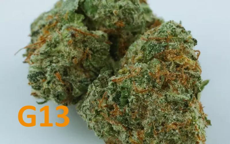 g13 strain
